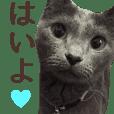 yoshi family cat photo sticker