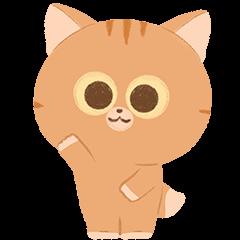 : Cute Orange Cat :
