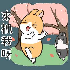 地瓜兔~旅行篇