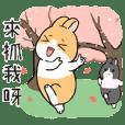 Sweet potato rabbit(go travel)
