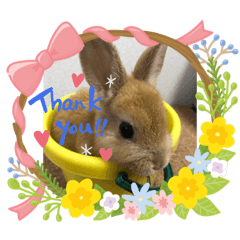 Thanks you happy heart rabbit