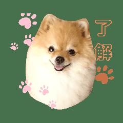 ポメチワ幸子さん