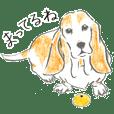 Shaggy Basset hound