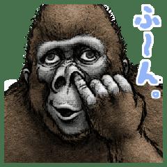 大猩猩 大猩猩