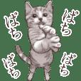 Strange pose cat 2