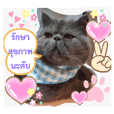Nong Pong & Kati good mind cat