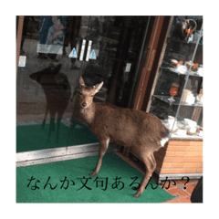 鹿のスタン