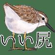 Japanese bird 6