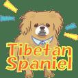 チベタンスパニエルの日常