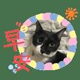 Cat / Miao miao
