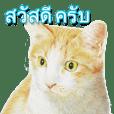 Colored pencil Cat sticker(Thai)