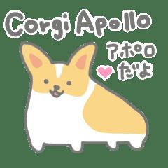 コーギーアポロ