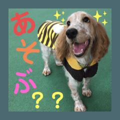 My dog -momo-