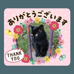 Healing cat nyan