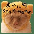 STAY HOME everyday TETO2