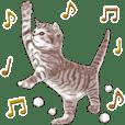 Strange pose cat 4