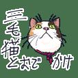Tortoiseshell cat 2
