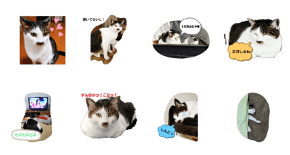 suzuki yume_20200519193415