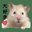 hamster marotan