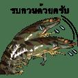 กุ้งกุลาดำ1