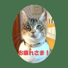 かわいい三毛猫スタンプ