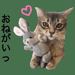 めるちゃん vol. 2