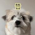 Homil emoji