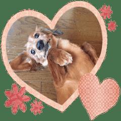 茶色い犬のスタンプ001