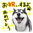 Husky EC festive Sticker and more