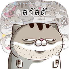fat cat Ami 7 (TH)