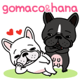 French bulldog Gomaco and Hana 2 English