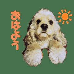 Mokaちゃんスタンプ2020