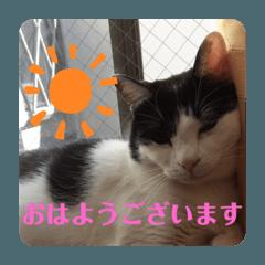 Nihonngo_20200525195732