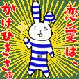 Yokoshima Rabbit.