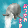 A little surreal dolphin!