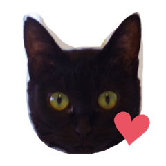 QUEUE cat