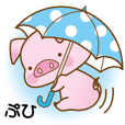 An Umbrella Pig