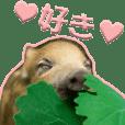 Baby boar(Regular Word Edition)