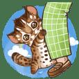 C.C's Leopard Cat