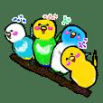 A 4 parakeets