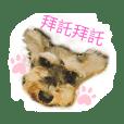 chriswang_20200529235024