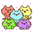 5 colors cat