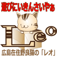 Stray cat Leo