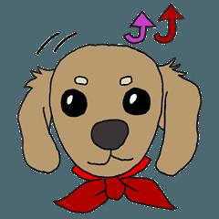 Dog's of cute