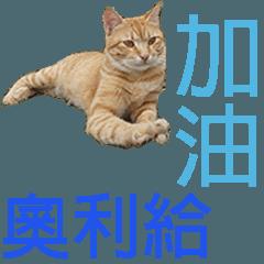 可愛貓咪 喵