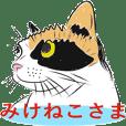三毛猫さまはおしゃれなカワイイ