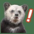 Noboribetsu Bearpark Official Sticker 2