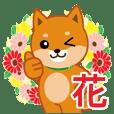 柴犬「ムサシ」25 花