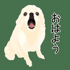Doggies of Kaneda family