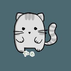 Kawaii Grey White Cat